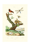 Ants  1833-39