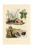 Sugarcane  1833-39