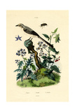 Mockingbird  1833-39