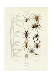 Scorpions  1833-39