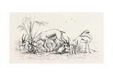 Group of Gazelles Egypt  1879