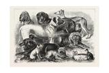 Prize Winners at the Alexandra Palace Dog Show  1876  London  UK