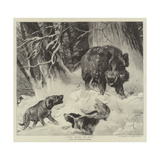 The Boar at Bay