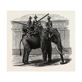 A Siamese War Elephant