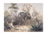 British Officers Tiger Shooting in India  1860s