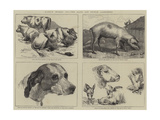 Early Works of the Late Sir Edwin Landseer