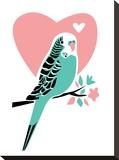 Parakeet-3