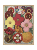Page from Flower Catalogue