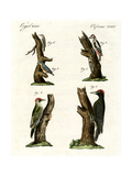 Different Kinds of Woodpecker