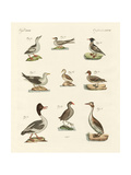 Different Kinds of Waterbirds