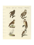 Different Kinds of Foreign Owls