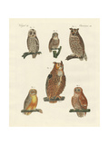 Various Kinds of Owls