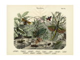 Insects  C1860