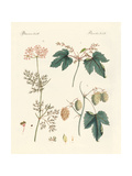 Indigenous Spice Plants