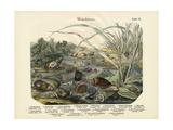 Molluscs  C1860