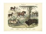Mammals  C1860