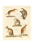 Strange Marsupials