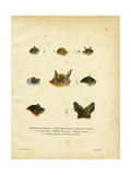 Bat Heads