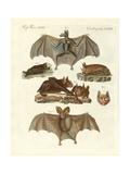 Rare Bats