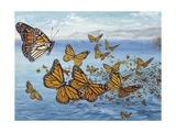 Migration of Monarch Butterflies (Danaus Plexippus)  Nymphalidae