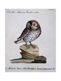 Yellow Owl  19th Century