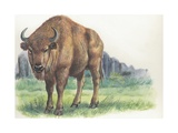 Close-Up of a Wisent Standing in the Forest (Bison Bonasus)