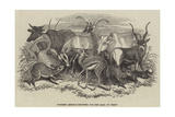 Foreign Animals Imported for the Earl of Derby
