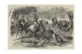 Kangaroo-Hunting in Australia