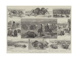 Buffalo-Hunting in the Western Territories of North America