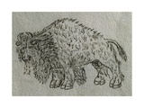Bison  Drawing  16th Century