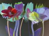 Tulip Blaze