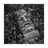 Botanic Gardens Statue Bearded Man