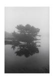 Block Island Boat Trees