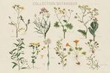 Collection Botanique