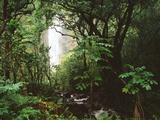 Waimoku Falls and Forest