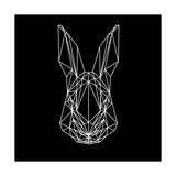 Rabbit on Black