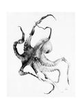 Pieuvre Reproduction d'art par Alexis Marcou