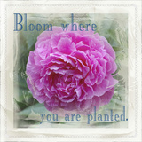 Bloomwhere you are Planted