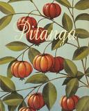 Pitanga Frutas Tropicales