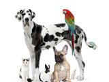 Group of Pets - Dog Cat  Bird  Reptile  Rabbit