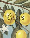 Guava Frutas Tropicales