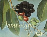 Jambolana Frutas Tropicales