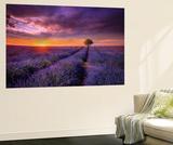 Lavender at Sunset