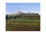 Mdina Poppies Malta 1