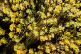 An Aerial Image of Early Fall in Aspen  Colorado
