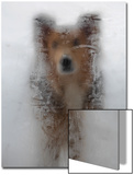 A Mixed Breed Dog Peers Through a Glass Door Covered in Ice Created by Moisture Inside the House