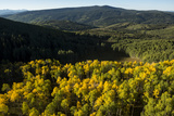 The Leaves Begin to Change Color in Early Fall in Aspen  Colorado