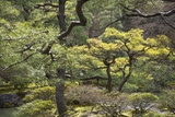 Trees and Shrubs at the Well Tended Japanese Garden at Ginkaku-Ji