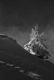 Dramatic Lighting Highlights a Snowy Landscape