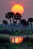 The Sun Sets Above Palms on a Cattle Ranch in the Everglades Headwaters Region of Florida